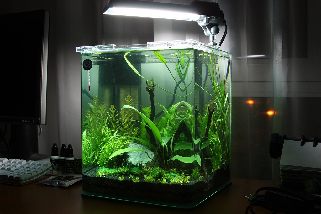 fish aquarium heater fish aquarium burning smell from. Black Bedroom Furniture Sets. Home Design Ideas