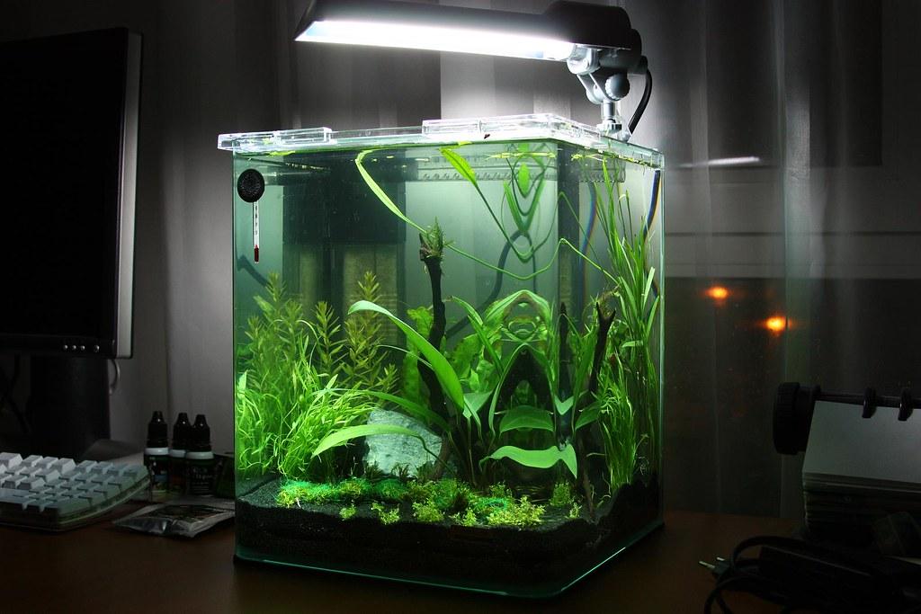 dennerle nano 20l aquarium. Black Bedroom Furniture Sets. Home Design Ideas