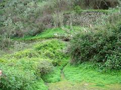 Gran Canaria invierno en la cumbre 39 paisajes (Rafael Gomez - http://micamara.es) Tags: en paisajes la canarias gran invierno isla islas canaria cumbre