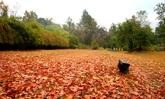other side (Emran Ashraf) Tags: autumn pakistan fall leaves maple sad islamabad f6 memorialpower