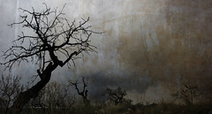 LES POBLES (laororo) Tags: dark arboles catalonia textures silueta threes sandragonzalez laororo