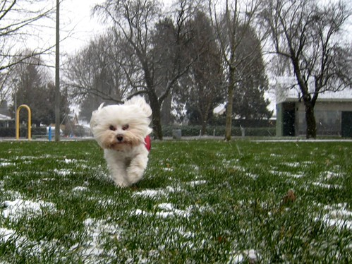 Run like the wind! It's snowing!