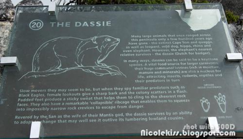dassie description
