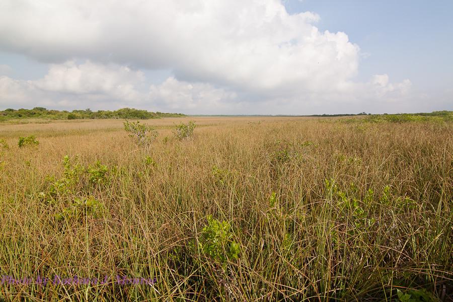 Everglades National Park (15 of 40)