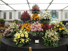 Lily display