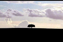Tree (CGoulao) Tags: sunset shadow tree portugal contraluz landscape arbole sombra paisagem nuvem alentejo rvore photoshoped chaparro mywinners abigfave superbmasterpiece treesubject theperfectphotographer