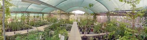The Garden Nursery