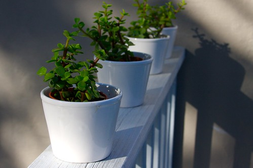 new planties