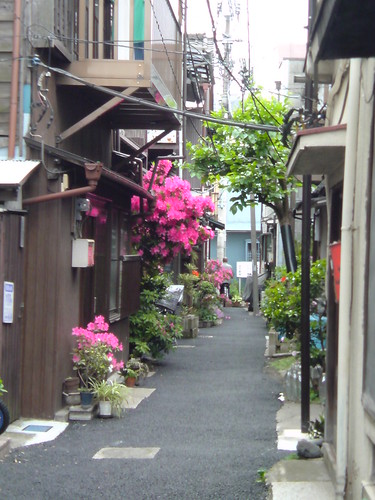 flower back street