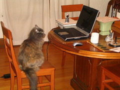 Isis checks her e-mail and the amount of manda...