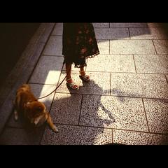 (Masahiro Makino) Tags: japan kyoto  lomo lca agfa vista 400 adobe lightroom photoshop gion  dog  girl  lomo200805181p1p