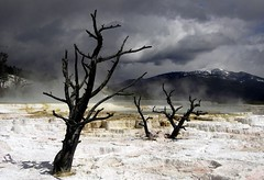 Mammoth Hot Springs (ricko) Tags: yellowstonenationalpark wyoming mammothhotsprings trees mountain deleteme2 saveme10 saveme11 savedbythedeletemegroup saveme12 mpt646 matchpointwinner landscape