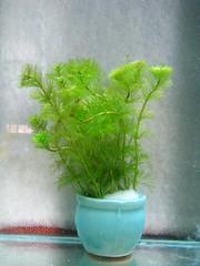 Thủy Sinh Tuấn Anh-Chuyên cây & Rêu Thủy Sinh, Cá Cảnh Biền & Hồ Cá Cảnh Biển - 14