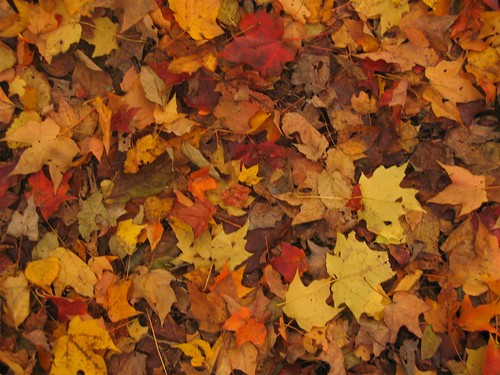 Fall leaves on the ground along the nature walk
