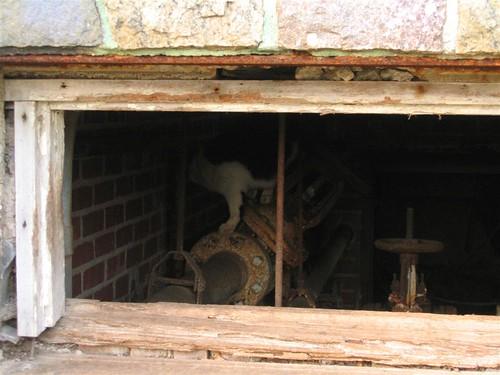 UE kitty exploring pipe valve