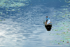 Dal Lake, Srinagar (hpk) Tags: woman india man green love hpk vikram water beautiful boat ripples kashmir srinagar jk donga paddel kashmirphotos jammukahsmir kashmirimages kashmirpeople