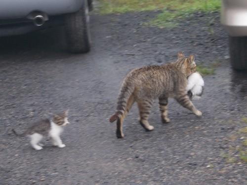 子猫がもう一匹いるの