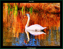 Swan Lake. (Irishphotographer) Tags: ireland sky lake art nature water colors oneaday sunshine birds river children yahoo google interesting swan perfect searchthebest pentax colorfull wildlife shoreline explore stunning msn sureal hdr outofthisworld ask eyecatcher jeeves lir irishart aficionados kinkade catart movingwater supershot burningskys flickrsbest beautifulireland freephotos hdrunlimited exploretop20 top20ireland abigfave day2day worldbest irishphotographer platinumphoto anawesomeshot anawsomeshot besthdr visiongroup diamondclassphotographer theunforgettablepictures imagesofireland overtheexcellence theperfectphotographer goldstaraward picturesofireland cleverandcreativecaptures sheildofexcelence pentaxk20d skyascanvas damniwishidtakenthat flickrlovers top20ireland20 goldenvisions irishhotographer photoartbloggroup kimshatwell irishcalender09 calendarofireland breathtakingphotosofnature