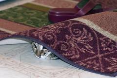 Nobody Home!! (karenturner) Tags: red macro home cat kitten floor maya peekaboo hide rug savannah laundryroom hiding household 2008 d300 nobodyhome nothingtoseehere micronikkor60mmf28 kittiesopendoors