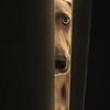 p e e k r (saikiishiki) Tags: door light portrait dog chien silly cute eye love beautiful dark square grey warm soft sweet ghost gray hound hond perro hund weimaraner kawaii peek curious bestfriend peeking spying ♥ perra inu omoshiroi onblack weim mukha vorstehhund 20f bej thelittledoglaughed waimarana masterpiecesoflightdark
