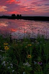 Vanishing Prairie (baldwinm16) Tags: sunset nature water illinois wildflowers naperville springbrook springbrookprairie crookedslough illinoisforestpreserve springbrookprairieforestpreserve damniwishidtakenthat