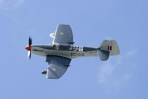 Warbird picture - Fairey Firefly - Flyfest Hamilton 2008-IMG_7864