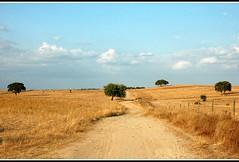 Ochre & Blue (CGoulao) Tags: blue portugal rural catchycolors landscape peace path paz paisagem estrada montemoronovo campo ochre alentejo tranquilidade passeio caminho anawesomeshot aplusphoto terrabatida flickrstruereflection1