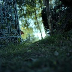 Green escape path (Poisson soluble au revelateur de lumiere) Tags: light color art film contrast zeiss kodak scanner lumire scan hasselblad contraste epson bruno f28 couleur servant planar 80mm 500cm portra160nc v700 autaut
