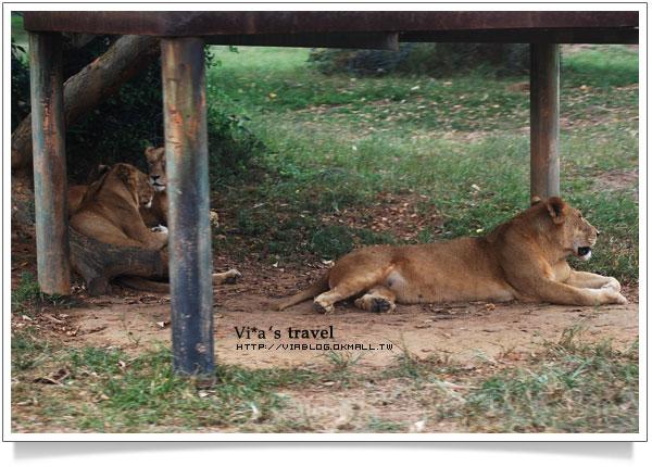 【新竹旅遊景點】新竹好玩的地方 - 六福村野生動物園