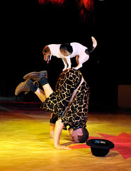Zippos Circus UK, 2008 (dirkjanranzijn) Tags: show dog dogs teatro nikon theater circo theatre circus performance hond tent hund acrobat 28 cirque voorstelling cirkus bigtop showbiz sawdust honden zirkus acrobatiek hunden acrobaten centrering nikkor3570 acrobaat nikond300