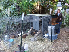 View of the new hen house