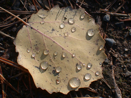 Fallen leaf with water drops