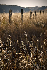 Out of Place (arianne...) Tags: sunset calgary field fence weeds warm perspective railway hills