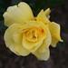 San Diego MAR 2008_Balboa Park_Inez Grant Parker Memorial Rose Garden_IMG_2949