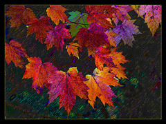 Autum (h_roach) Tags: fall colors leaves blackbackground photoshop autum blueribbonwinner mywinners proudshopper