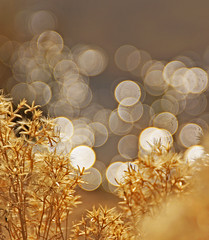 ~Golden Honey And Bokeh Reflection~ (mikenpo) Tags: water golden bokeh