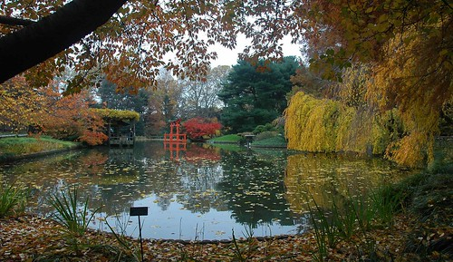 Pond, Japanese Garden, Brooklyn Botanic Garden