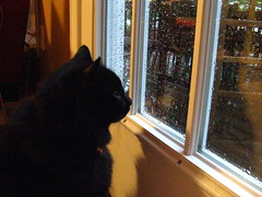 Huggy Bear watching the rain
