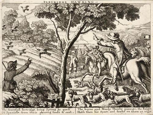 005- Cetreria-caza de la perdiz