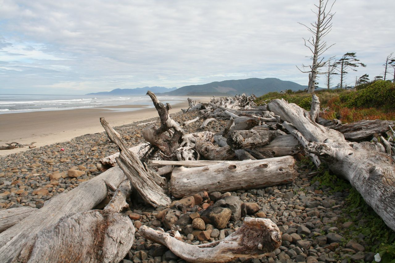 Oregon beach vista