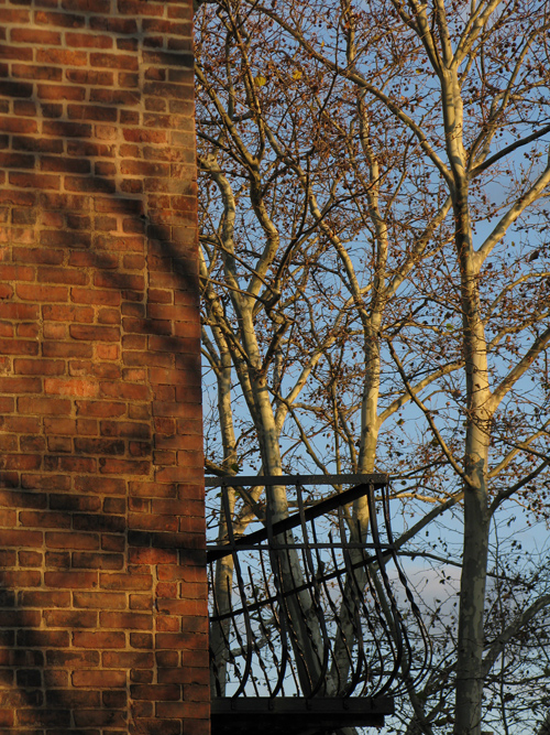 a brick wall and leafless trees at sunset