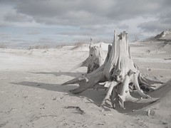 November - Old Indian Trail (cedarkayak) Tags: november winter landscape frozen sand shadows michigan dune shoreline lakemichigan explore driftwood sleepingbeardunes ghostforest oldindiantrail cedarkayak