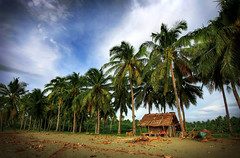 Tropical (the-earth-colors) Tags: blue summer sky hot green canon palms eos sand skies sandy sunny explore kubo coconuts tropics pinoy balay bahay humid cocos bahaykubo manticao 40d macquinto