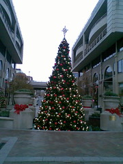 Christmas Tree at Washington Harbour