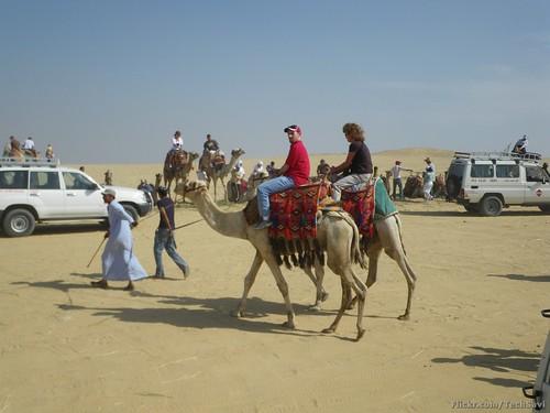 Camel Ride 11
