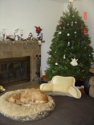 Rosie sleeping by the Xmas tree 12/7/08