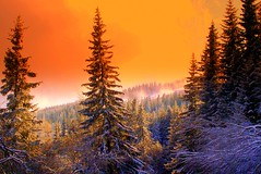 Magic Forest (Stella VM) Tags: trees winter sky orange mountain snow ski color colour tree nature beautiful beauty pinetree forest landscape sofia magic bulgaria wonderland