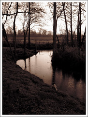 Riverbend, Oxford (Martin Beek) Tags: trees light reflection sepia woodland reflections landscape oxford cp atmospheric refelction theforest inthewoods reflectedlight notdarkyet atmosphericlandscape woodlandart monochromelandscape photographyandpainting monochromeandsepia monochromelandscapes landscapeswithatmosphere reflectionsphotographyandpainting thecameraandtheartist theinfluenceofphotography