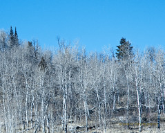 Naked (Von Taylor) Tags: trees winter sky mountain nature landscape utah nikon aspen scenics logancanyon d300 cachecounty bej mywinners theunforgettablepictures