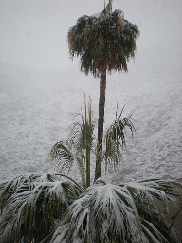 Palms and snow 12.17.2008 by bossco from Flickr